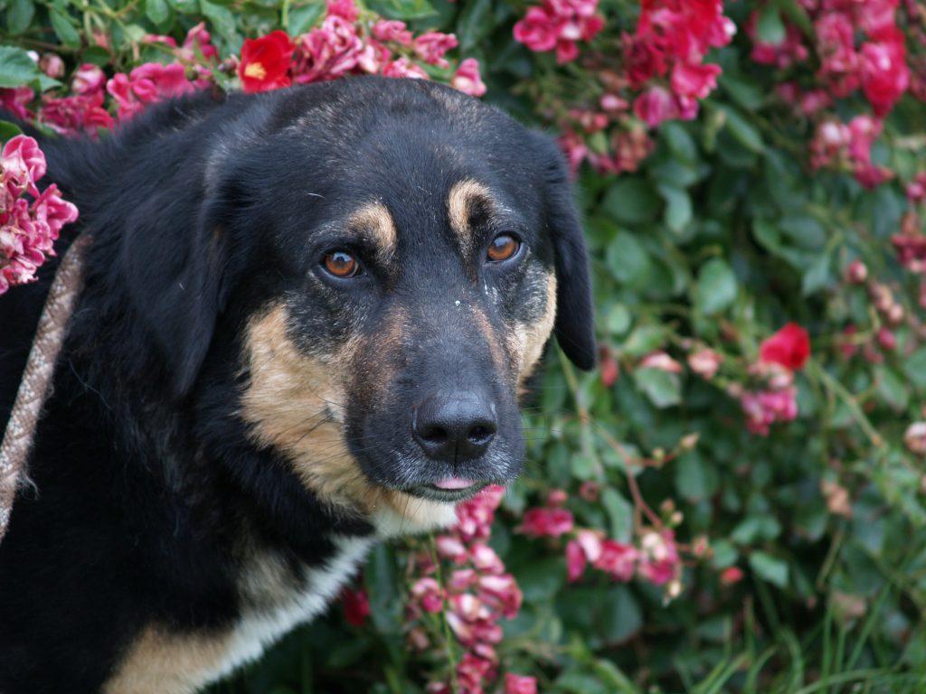 Tierpension Pfötchentraum: Hunde